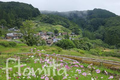 1コスモス咲く田園_長野県長野市9月.jpg
