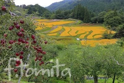 2リンゴと棚田のある風景_長野県長野市.jpg