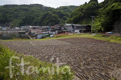 B4津軽半島のわかめ干し(人)_青森県外ヶ浜町7月.jpg