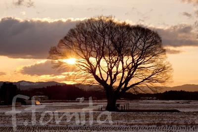 大エノキの朝.jpg
