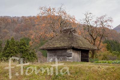茅葺小屋と柿の木.jpg