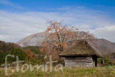 茅葺小屋と柿の木4.jpg