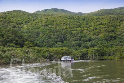 2B西表島、仲間川.jpg