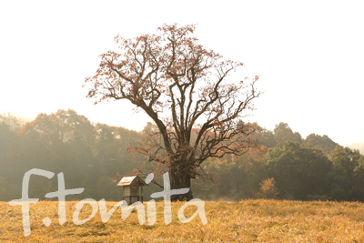 B2柿の木と祠.jpg