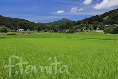 B夏の田園と筑波山.jpg