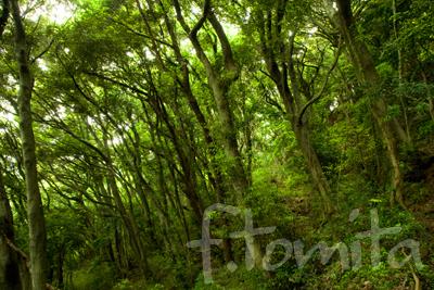 ここいの森