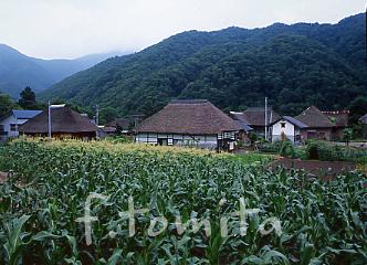 福島水引1.jpg