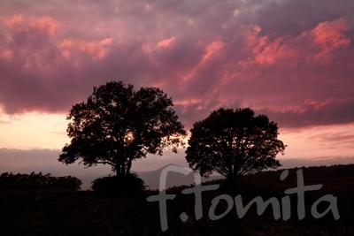 丘の木の夕景