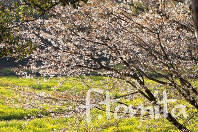 春の光.jpg