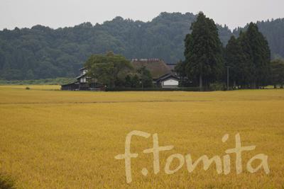 稲田と民家