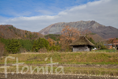 茅葺小屋と柿の木1.jpg