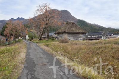 茅葺小屋と柿の木2.jpg